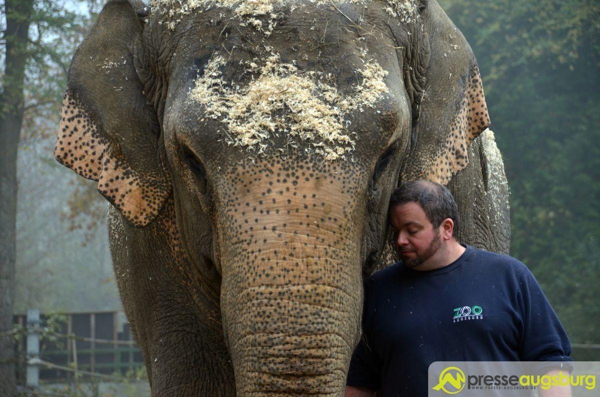 20151103_zoo_elefantenpapier_030 Zoo Augsburg | Keine EU-Mittel für die Elefantenanlage - Steht der Tierpark vor dem Aus? Freizeit News Zoo Augsburg Elefanten EU Zoo Augsburg |Presse Augsburg