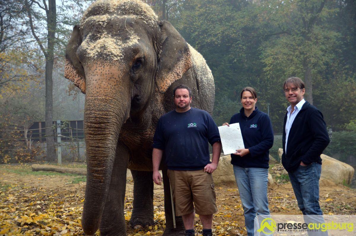 20151103_zoo_elefantenpapier_032 Alles Mist?! | Wie der Augsburger Zoo aus Elefantenkot etwas Besonderes macht Bildergalerien Freizeit News Zoo Augsburg Elefantenpapier Klaus Wengenmayr Zoo Augsburg |Presse Augsburg