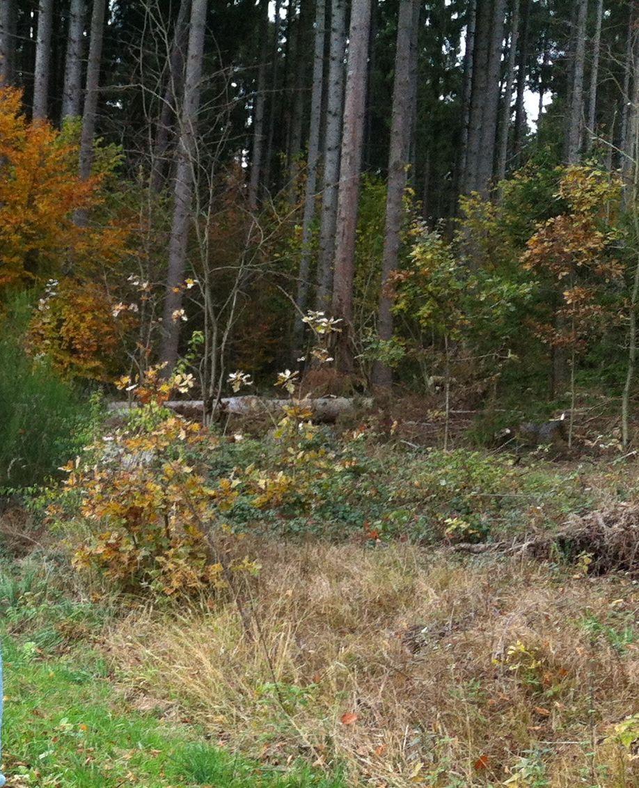 wald1 Stadtwald Augsburg | Eigensinn und Gleichgültigkeit mit beinahe tödlichen Folgen News Baumfällarbeiten Gefahr Radfahrer Stadtwald Augsburg |Presse Augsburg