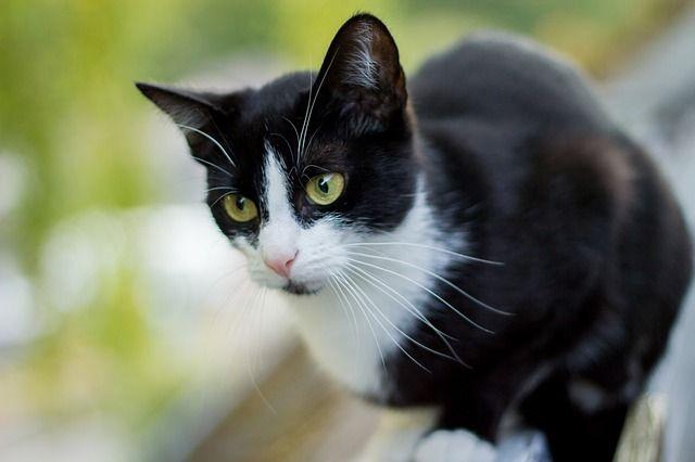 cat-393476_640