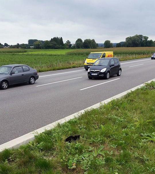 polizei_katze_a8 Polizei rettet kleine schwarze Katze auf der A8 News Polizei & Co A8 Augsburg Ost Autobahnpolizei Gersthofen Einsatz Lechbrücke Rastanlage |Presse Augsburg