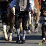 20141026_gabelbachergreut_leonhardi_025-150x150 BILDERGALERIE | Der Leonhardiritt in Gabelbachergreut Bildergalerien News Gabelbachergreut Leonhardiritt |Presse Augsburg