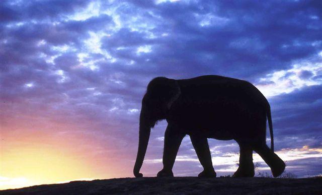 Elefanten-Sri04-373_fritz-jantschke Elefanten im Zwielicht - Haben Asiens Rüsseltiere eine Zukunft? Freizeit News