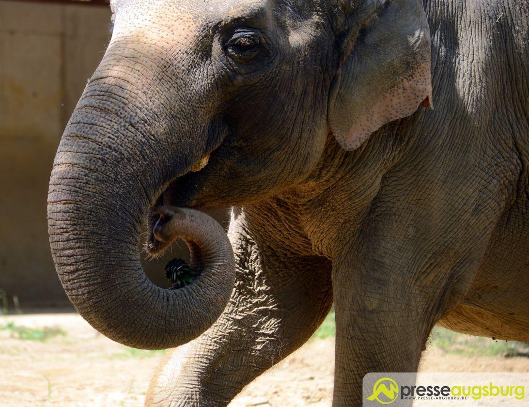 2015 06 01 Zoo Targa 60 – 34 Elfefant