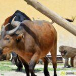 20150530_zoo_002-150x150 Bildergalerie | Ein Spaziergang durch den Augsburger Zoo - Die vielleicht letzten Aufnahmen von Nashorn Daniel Bildergalerien Freizeit News Bildergalerie Zoo Augsburg |Presse Augsburg
