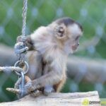 20150530_zoo_026-150x150 Bildergalerie | Ein Spaziergang durch den Augsburger Zoo - Die vielleicht letzten Aufnahmen von Nashorn Daniel Bildergalerien Freizeit News Bildergalerie Zoo Augsburg |Presse Augsburg