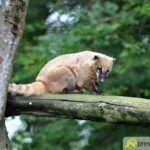 20150530_zoo_027_kleiner-panda-150x150 Bildergalerie | Ein Spaziergang durch den Augsburger Zoo - Die vielleicht letzten Aufnahmen von Nashorn Daniel Bildergalerien Freizeit News Bildergalerie Zoo Augsburg |Presse Augsburg