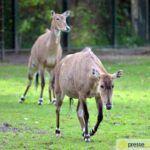 20150530_zoo_065-150x150 Bildergalerie | Ein Spaziergang durch den Augsburger Zoo - Die vielleicht letzten Aufnahmen von Nashorn Daniel Bildergalerien Freizeit News Bildergalerie Zoo Augsburg |Presse Augsburg