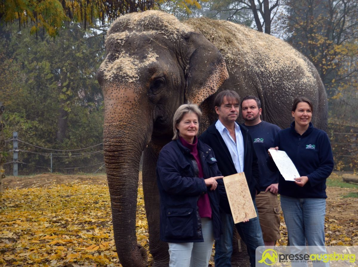 20151103 zoo elefantenpapier 024 presse augsburg nachrichten f r augsburg und bayerisch schwaben. Black Bedroom Furniture Sets. Home Design Ideas