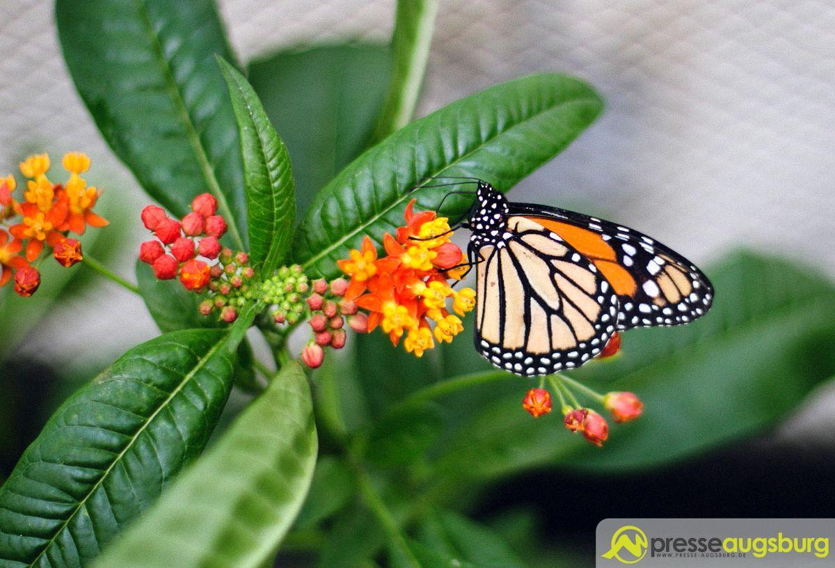 20160228 Botanischer Garten Schmetterlinge 003