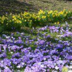 2016-03-20-Schießgraben-–-03-frühling-150x150 Bildergalerie | Es wird Frühling in der Fuggerstadt Bildergalerien News Augsburg Frühling |Presse Augsburg