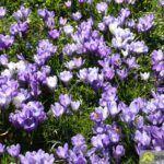 2016-03-20-Schießgraben-–-04-150x150 Bildergalerie | Es wird Frühling in der Fuggerstadt Bildergalerien News Augsburg Frühling |Presse Augsburg