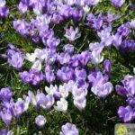 2016-03-20-Schießgraben-–-05-150x150 Bildergalerie | Es wird Frühling in der Fuggerstadt Bildergalerien News Augsburg Frühling |Presse Augsburg