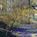 2016-03-20-Schießgraben-–-09-150x150 Bildergalerie | Es wird Frühling in der Fuggerstadt Bildergalerien News Augsburg Frühling |Presse Augsburg
