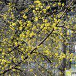 2016-03-20-Schießgraben-–-10-150x150 Bildergalerie | Es wird Frühling in der Fuggerstadt Bildergalerien News Augsburg Frühling |Presse Augsburg