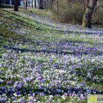 2016-03-20-Schießgraben-–-12-150x150 Bildergalerie | Es wird Frühling in der Fuggerstadt Bildergalerien News Augsburg Frühling |Presse Augsburg