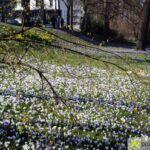 2016-03-20-Schießgraben-–-17-150x150 Bildergalerie | Es wird Frühling in der Fuggerstadt Bildergalerien News Augsburg Frühling |Presse Augsburg