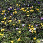 2016-03-20-Schießgraben-–-18-150x150 Bildergalerie | Es wird Frühling in der Fuggerstadt Bildergalerien News Augsburg Frühling |Presse Augsburg