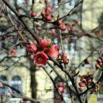 2016-03-20-Schießgraben-–-22-150x150 Bildergalerie | Es wird Frühling in der Fuggerstadt Bildergalerien News Augsburg Frühling |Presse Augsburg
