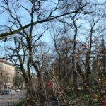 2016-03-20-Schießgraben-–-23-150x150 Bildergalerie | Es wird Frühling in der Fuggerstadt Bildergalerien News Augsburg Frühling |Presse Augsburg