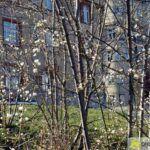 2016-03-20-Schießgraben-–-24-150x150 Bildergalerie | Es wird Frühling in der Fuggerstadt Bildergalerien News Augsburg Frühling |Presse Augsburg