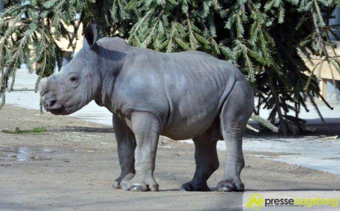 20160310 Zoo 025 Nashorn Kibo