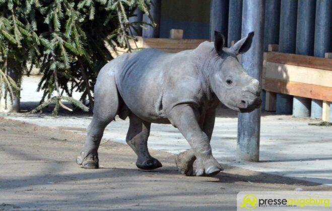 20160310 Zoo 026 Nashorn Kibo