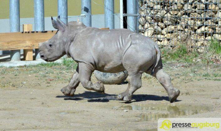 20160329 Zoo 023 Nashorn Kibo