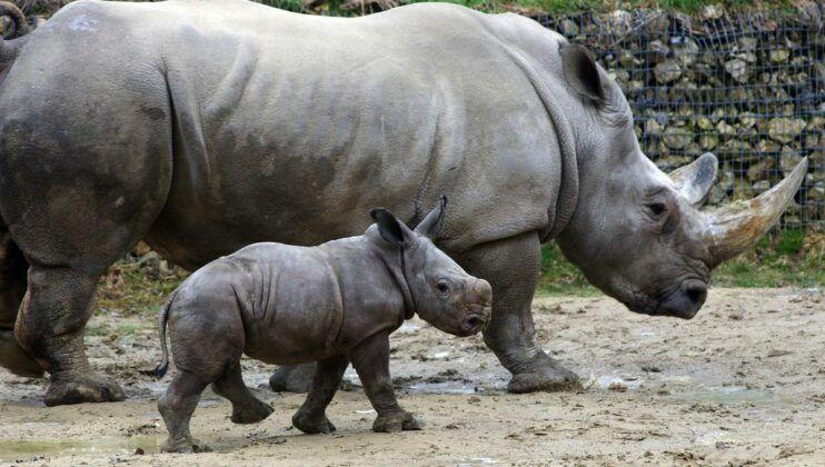 Zoo Nashorn Tj139353 K