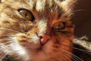 Wallerstein |  Katze in den Kopf geschossen
