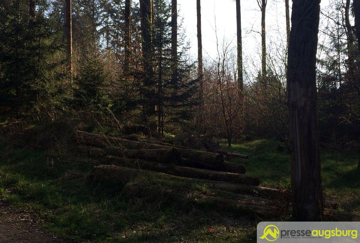 2017 Frühling Oberschönenfeld 012 Wald