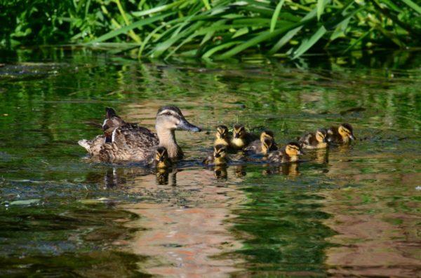 Göggingen | Rettungseinsatz der tierischen Art während einer Geschwindigkeitsmessung – Nils Holgersson gesucht