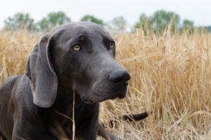 Hochzoll | Nähe Kuhsee: Hund erleidet Vergiftung durch Giftköder