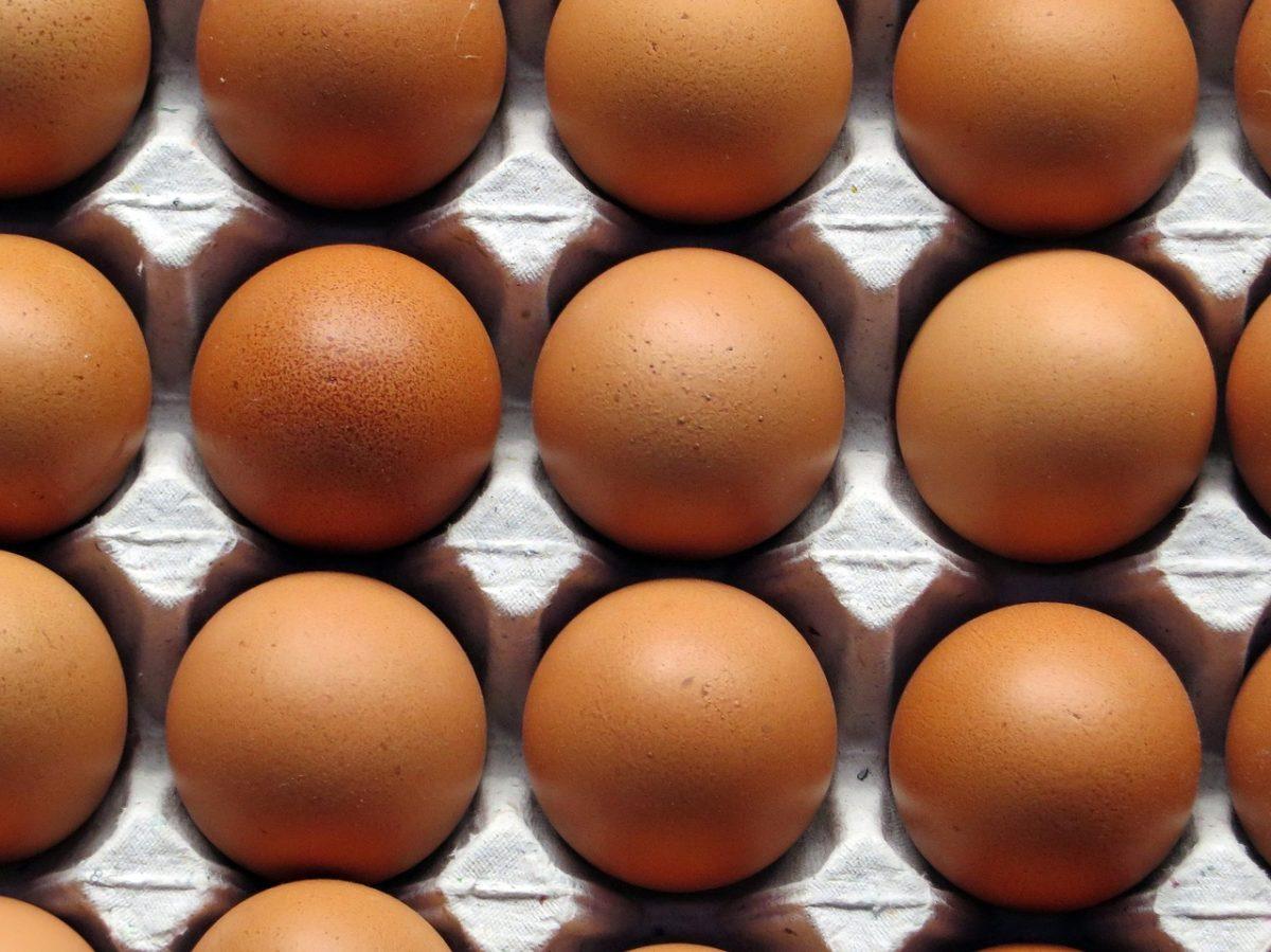 eier_1501827339-1200x899 Gift-Skandal |ALDI nimmt vorsorglich alle Eier aus dem Verkauf Gesundheit News Aldi Eier Gift Rückruf Skandal |Presse Augsburg