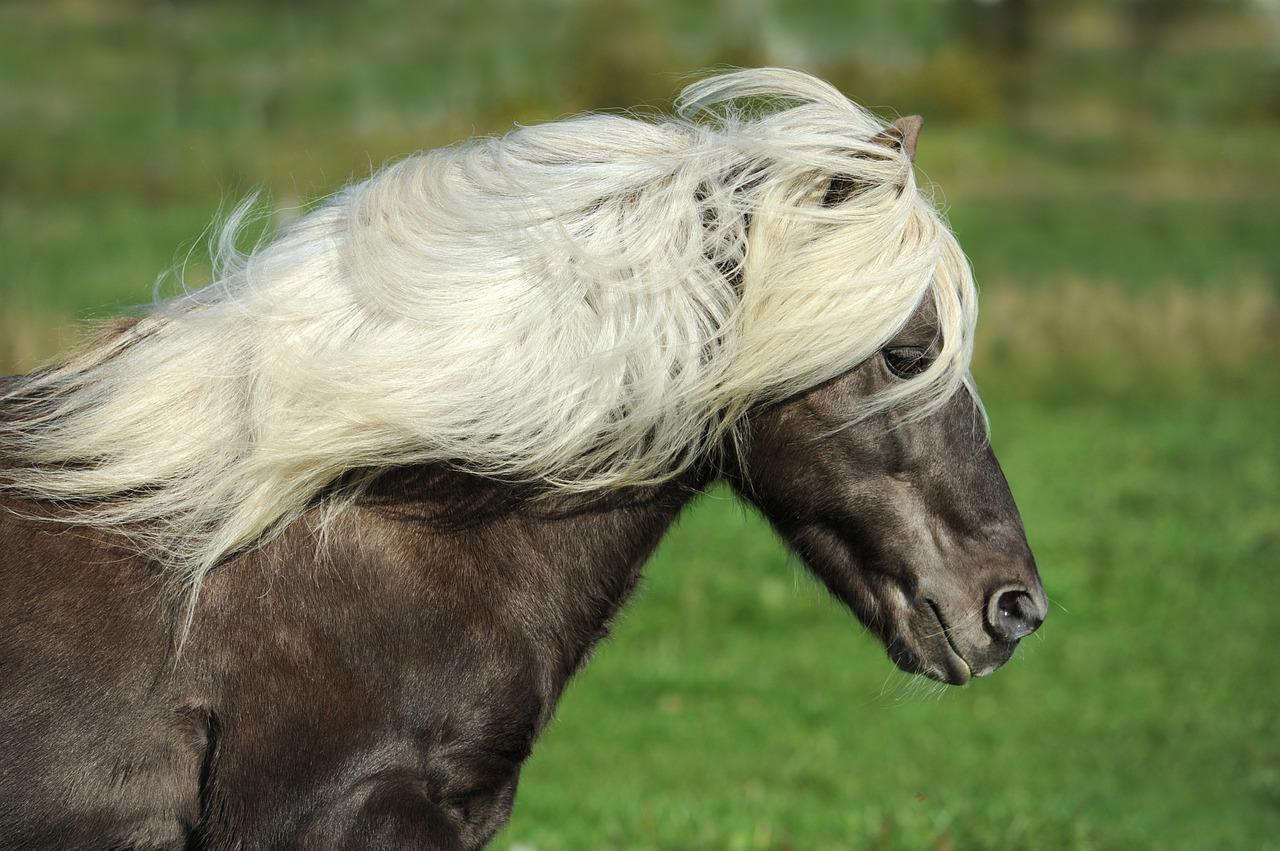 Island Pferd 1507634371