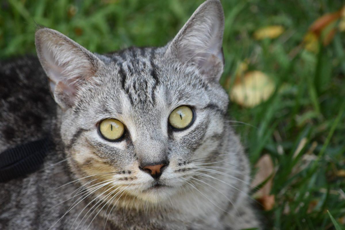 Katzen 1507355148