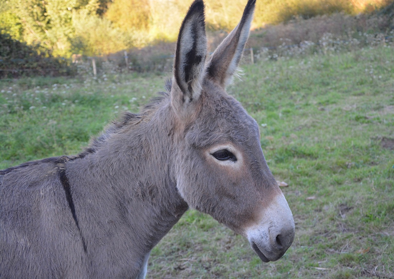 Donkey Sex Porn Videos  Pornhubcom