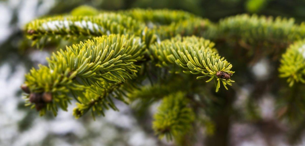 tree-3010103_1280 Landkreis Neuburg-Schrobenhausen |Unbekannte stehlen Christbaum von Terrasse Neuburg-Schrobenhausen News Polizei & Co |Presse Augsburg
