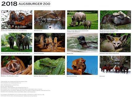 zoo augsburg aktuell ein gutes zoojahr geht zu ende ein neues k ndigt sich schon an presse. Black Bedroom Furniture Sets. Home Design Ideas
