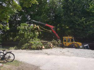 Sperrzone am Augsburger Herrenbach ist aufgehoben -  Fäll- und Baumpflegearbeiten abgeschlossen