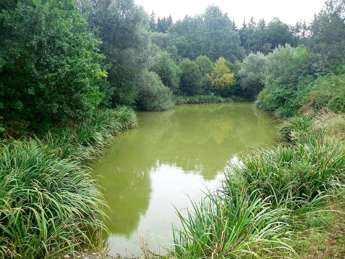 Hochwasserüberlauf_Pitzling Landsberg | Regenüberlaufbecken in Pitzling wird abgefischt Landsberg am Lech Biotop Fische0 Pitzling |Presse Augsburg