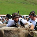IMG_9415-150x150 Bildergalerie   Der Sommer geht zu Ende - Viehscheid in Balderschwang Bildergalerien Freizeit News Newsletter Oberallgäu Balderschwang Viehscheid  Presse Augsburg