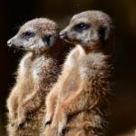 zoo_058-150x150 Bildergalerie  Goldener Herbstsonntag im Augsburger Zoo Bildergalerien Freizeit News Newsletter Zoo Augsburg Augsburger Zoo  Presse Augsburg