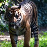 zoo_068-150x150 Bildergalerie  Goldener Herbstsonntag im Augsburger Zoo Bildergalerien Freizeit News Newsletter Zoo Augsburg Augsburger Zoo  Presse Augsburg