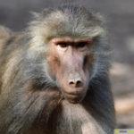 zoo_070-150x150 Bildergalerie  Goldener Herbstsonntag im Augsburger Zoo Bildergalerien Freizeit News Newsletter Zoo Augsburg Augsburger Zoo  Presse Augsburg