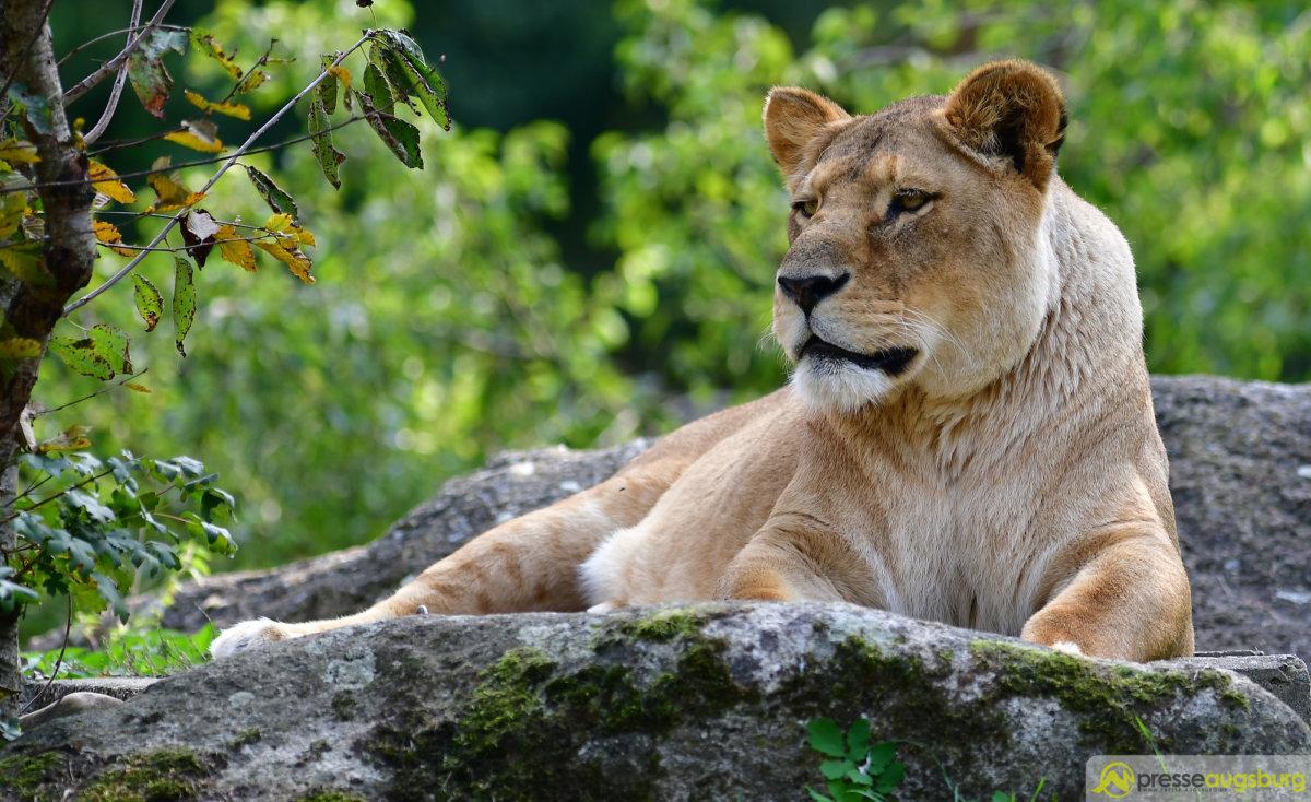 Zoo 071