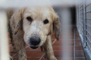 Mehr als 100 vernachlässigte Hunde in Obermaxfeld gefunden - Tierheim Augsburg hilft bei Rettungsaktion