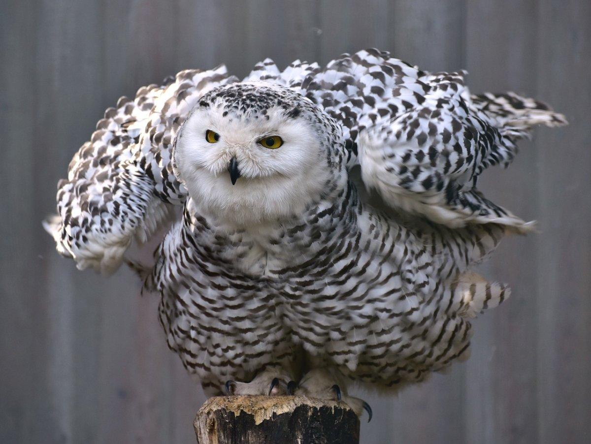 Owl 727586 1280