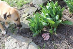 Warnung vor möglichen Giftködern am Augsburger Kuhsee – PETA setzt Belohnung aus