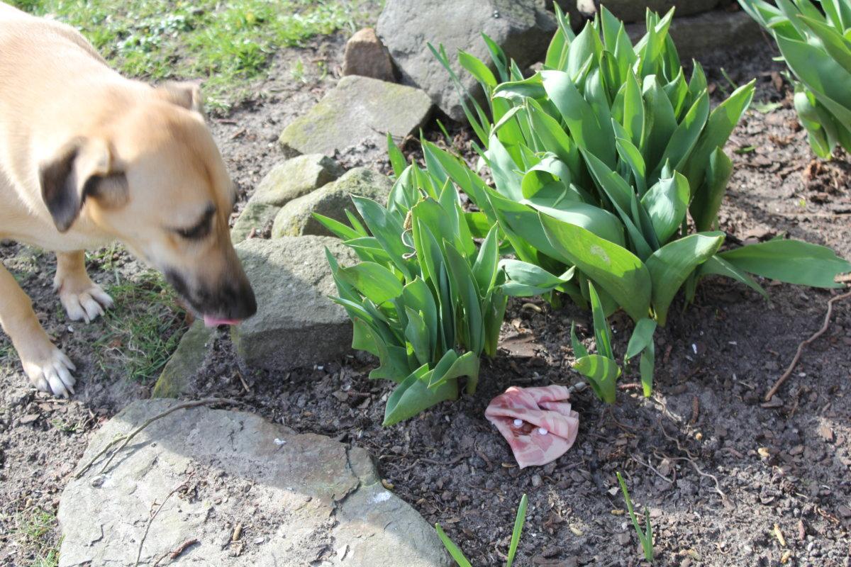 Hunde Giftkoeder 1 C Peta D